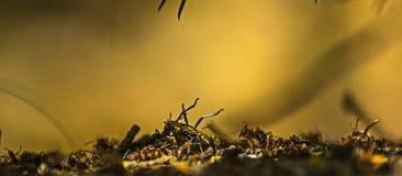 Nahaufnahme von den Ameisen, die einen Käfer auf den Ameisenhaufen tragen Stockfoto