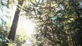 Nahaufnahme von den durch Netz abgedeckten und getrockneten Tannen- und Kieferniederlassungen verl?sst im Wald am sonnigen Sommer stock video