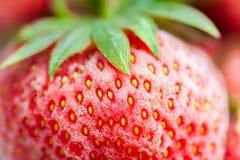 Nahaufnahme von einer gefrorenen roten Erdbeere mit Frost Lizenzfreie Stockfotografie