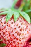 Nahaufnahme von einer gefrorenen roten Erdbeere mit Frost Stockfotos