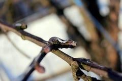 Nahaufnahme von eisigen Zweigen von Apfelbäumen im Winter stockfoto