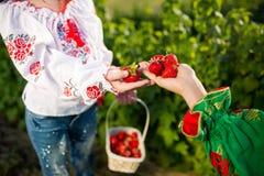 Nahaufnahme von Frau ` s übergibt das Halten des Korbes mit Biogartensommer-Erdbeerbeeren Gesunder Lebensstil und gesunde Ernähru lizenzfreies stockbild