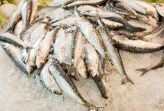 Nahaufnahme von frischen Fischen im Eis am Markt Lizenzfreie Stockfotos