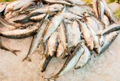 Nahaufnahme von frischen Fischen im Eis am Markt Stockbild