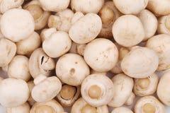 Nahaufnahme von frischen geschmackvollen Champignonpilzen Stockfoto