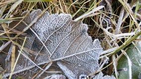 Nahaufnahme von Frost auf Blatt im Gras Stockfotos