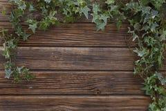 Nahaufnahme von grünen Efeuzweigen auf einem hölzernen Hintergrund der Weinlese Stockbilder
