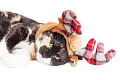 Nahaufnahme von Kitten Wearing Christmas Reindeer Antlers Stockfoto