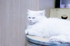 Nahaufnahme von netten Katzen lizenzfreies stockfoto