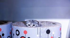 Nahaufnahme von netten Katzen lizenzfreie stockfotografie