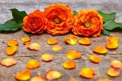 Nahaufnahme von orange Chrysanthemen auf Holztisch Lizenzfreie Stockbilder