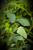 Nahaufnahme von Regen-Tau-Tropfen auf grünen Blättern Lizenzfreie Stockbilder