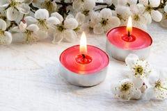 Nahaufnahme von roten Kerzen nahe den Niederlassungen von wei?en Kirschbl?ten lizenzfreie stockfotografie