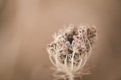 Nahaufnahme von Sämlingen der wild wachsenden Pflanze Lizenzfreie Stockfotografie