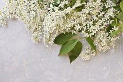 Nahaufnahme von schönen blühenden Apfelbaumasten auf einem grauen Hintergrund Lizenzfreies Stockbild