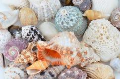 Nahaufnahme von Seashells stockbilder