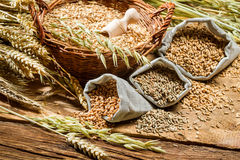 Nahaufnahme von Taschen mit Getreidekörnern Stockfotografie