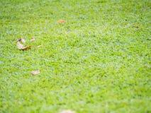 Nahaufnahme von trockenen Blättern auf grünem Gras Stockbild