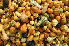 Nahaufnahme von vielen Autumn Gourds Lizenzfreie Stockfotografie