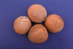 Nahaufnahme von vier hart und braune Kokosnüsse auf einem dunklen purpurroten Hintergrund Natürliche Kokosnüsse der tropischen Fr stockbild