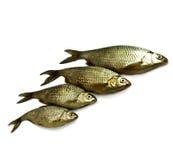 Nahaufnahme von vier rohen Flussfischen Stockfotografie