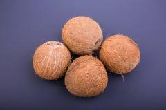 Nahaufnahme von vier tropischen Kokosnüssen auf einem dunklen purpurroten Hintergrund Köstliche Sommerfrüchte Nahrhafte exotische lizenzfreies stockbild