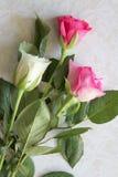 Nahaufnahme von weißen und rosa Rosen Stockbilder