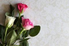 Nahaufnahme von weißen und rosa Rosen Lizenzfreie Stockfotos