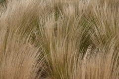 Nahaufnahme von wellenartig bewegenden Gräsern stockfotografie