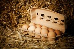 Nahaufnahme von zehn frischen braunen Eiern im Karton Lizenzfreie Stockbilder