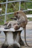 Nahaufnahme von zwei netten Affen auf einer Tabelle am Affeberg Khao Takiab in Hua Hin, Thailand, Asien Stockfoto