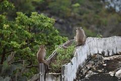 Nahaufnahme von zwei netten Affen, die auf einer Wand am Affeberg Khao Takiab in Hua Hin, Thailand, Asien sitzen Lizenzfreies Stockbild