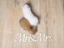 Nahaufnahme von zwei netten Kaninchen auf einem hölzernen Hintergrund Stockfotos