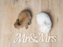 Nahaufnahme von zwei netten Kaninchen auf einem hölzernen Hintergrund Lizenzfreies Stockbild