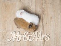 Nahaufnahme von zwei netten Kaninchen auf einem hölzernen Hintergrund Lizenzfreie Stockbilder