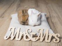 Nahaufnahme von zwei netten Kaninchen auf einem hölzernen Hintergrund Stockfoto