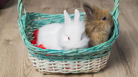 Nahaufnahme von zwei netten Kaninchen in einem weißen Korb Stockfotografie