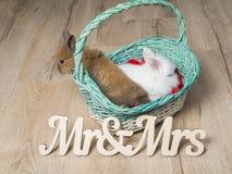 Nahaufnahme von zwei netten Kaninchen in einem weißen Korb Lizenzfreie Stockfotos