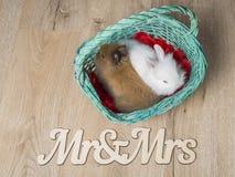 Nahaufnahme von zwei netten Kaninchen in einem weißen Korb Stockbild