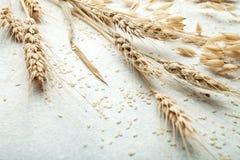 Nahaufnahme, Weizenspitze auf weißem Hintergrund, Raum für Text stockfoto