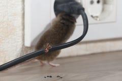 Nahaufnahme zerfressener Draht auf dem Hintergrund der Maus klettert in Ausgang lizenzfreie stockfotos