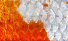 Nahaufnahme zu orange und weißem glänzendem Koi Fish Scale Background Lizenzfreie Stockfotos