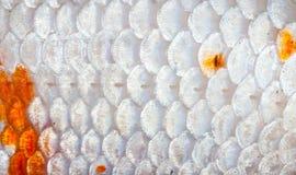 Nahaufnahme zu orange und weißem glänzendem Koi Fish Scale Background Stockfoto