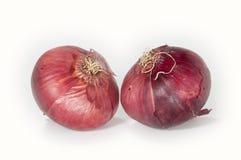 Nahaufnahmeabbildung mit zwei Zwiebeln Stockfoto