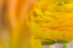 Nahaufnahmeabstraktion einer gelben Blume Stockfotografie