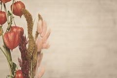 Nahaufnahmeansicht der Physalisanlage Abbildung der roten Lilie Stockfotografie