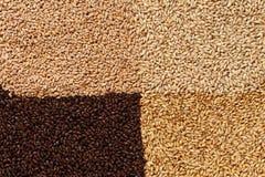 Nahaufnahmeansicht von 4 Arten Malz-Körner Bestandteil für Bier BAC lizenzfreie stockfotos