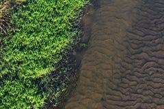 Nahaufnahmeansicht von Flussbank Grünes Gras und sandige Unterseite durch seichtes Wasser lizenzfreie stockfotografie