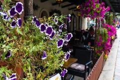 Nahaufnahmeansicht von purpurroten Blumen in den Töpfen vor Café Stockbild
