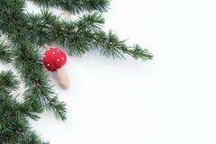Nahaufnahmeansichtzeder verzweigt sich und Weihnachtsdekorationspilz auf einem weißen Hintergrund Abstraktes Hintergrundmuster de Stockbild